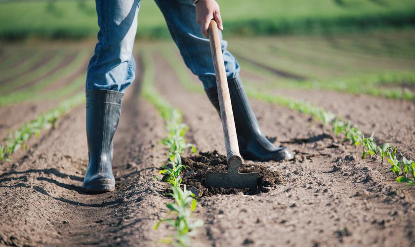 Cómo la pequeña agricultura puede lograr superar sus obstáculos económicos