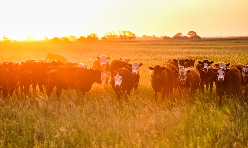 La larga tradición de las ferias de ganado, el factor clave para el desarrollo agropecuario de Chile