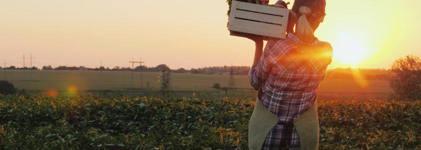 Ruralcoop, la plataforma que incentiva el desarrollo del cooperativismo rural en Chile